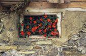 цветы в окне — Стоковое фото