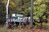 A Wagon In The Woods — Stock Photo