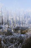 A Frosty Winter Scene — Stock Photo