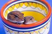 A Pair Of Critters — Stock Photo