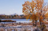 Árvore de outono por um rio — Fotografia Stock
