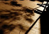 Shadow Of A Tree On The Pavement — Stock Photo