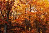 A Vibrant Forest In The Fall — Stock Photo