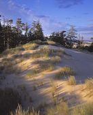 ветра прокатилась песок и трава на песчаных дюнах — Стоковое фото