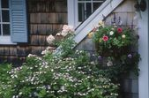 Garden Flowers And House Exterior, Cape Cod Massachusetts U.S.A. — Stock Photo