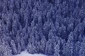Snow Covered Forest — Stock Photo