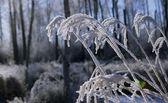 крупным планом морозный травы — Стоковое фото