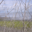 Stock Photo: Close-Up Of Branches Next To Shore