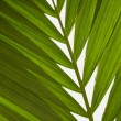 Close Up Of Plant Frond — Stock Photo