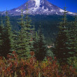 Stock Photo: Mount Adams, Gifford Pinchot National Forest