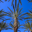 Palm Trees — Stock Photo #31691249