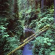 Gorge With Fallen Logs, Sol Duc Gorge, Olympic National Park — Stock Photo