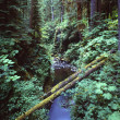 Stock Photo: Gorge With Fallen Logs, Sol Duc Gorge, Olympic National Park