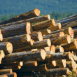 A Pile Of Logs — Stock Photo
