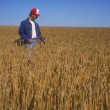 Stock Photo: Farmer Surveying Crop