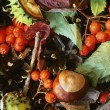 Stock Photo: Close-Up Of Fall Foliage, Berries And Chestnut Seeds