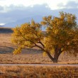 Stockfoto: An Autumn Tree
