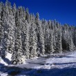 Beaver Dam Lined By Snow Covered Douglas Fir Forest, East Fork Of The Jemez River, Jemez National Recreational Area — Stock Photo #31692309