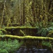 Mossy Logs In Rainforest — Stock Photo #31692427