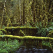 Stock Photo: Mossy Logs In Rainforest