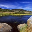 Stock Photo: Boulders On Lily Pond, Beartooth Mountains