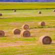 Stock Photo: Hay Bales In Field