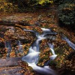 Little River Cascades And Fallen Autumn Leaves, Great Smoky Mountains National Park — Stock Photo