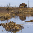 Beaver Dam In Secluded Area — Stock Photo #31693657