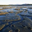 Stock Photo: Grizzly Bear Tracks In Mud On Tidal Flats, Alaska