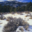 Stock Photo: Winter Scene, Wheeler Peak, Great Basin National Park