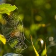 Spiderweb — Stock Photo #31694121