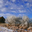 Stock Photo: Frosty Day On Prairies