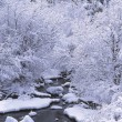 Stream Passing Through A Fairyland Of Trees Covered With Fresh Snow, Jemez River — Stock Photo