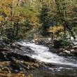 Woodland River — Stockfoto #31694517