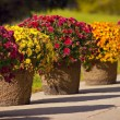 Pots Of Blooms — Stock Photo #31695493
