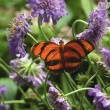 Butterfly — Stock Photo #31695525