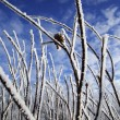 Closeup Of Hoarfrost — Stock Photo
