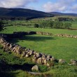 Irish Landscape With Stone Walls And Sheep Pastures — Stock Photo #31695665