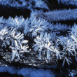 Hoar Frost — Stock Photo #31695959