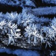 Stock Photo: Hoar Frost