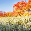 Frosty Grass In The Autumn — Stock Photo
