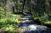 Вода, перемещение через лес — Стоковое фото