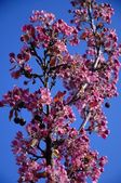 Purple Flowers On Tree — Stock Photo