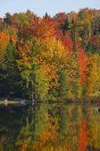 водоем в осень — Стоковое фото