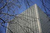 Skyscraper Seen Through Bare Branches — Foto Stock