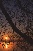 Tree Branches Silhouetted Against A Sunset Over A Lake — Stock Photo