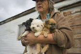 Three Puppies — Stock Photo