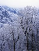 Snow On Forest Trees, Black-Colored Trunks, Newfound Gap Road, Great Smoky Mountains National Park — Stock Photo