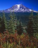 Mount Adams, Gifford Pinchot National Forest — Stock Photo