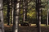 Picnic Table In The Woods — Stock Photo